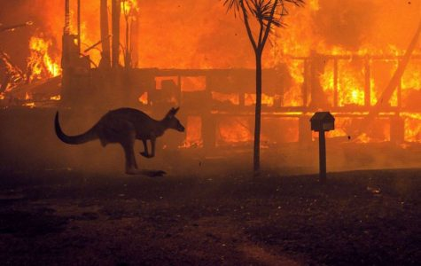 The Unfolding Tragedy of the Australia Wildfires
