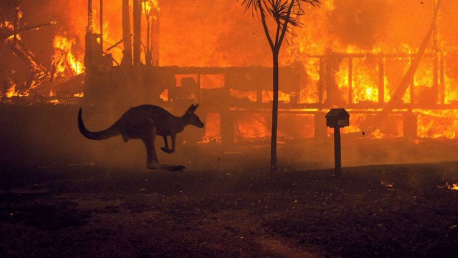 The+Unfolding+Tragedy+of+the+Australia+Wildfires